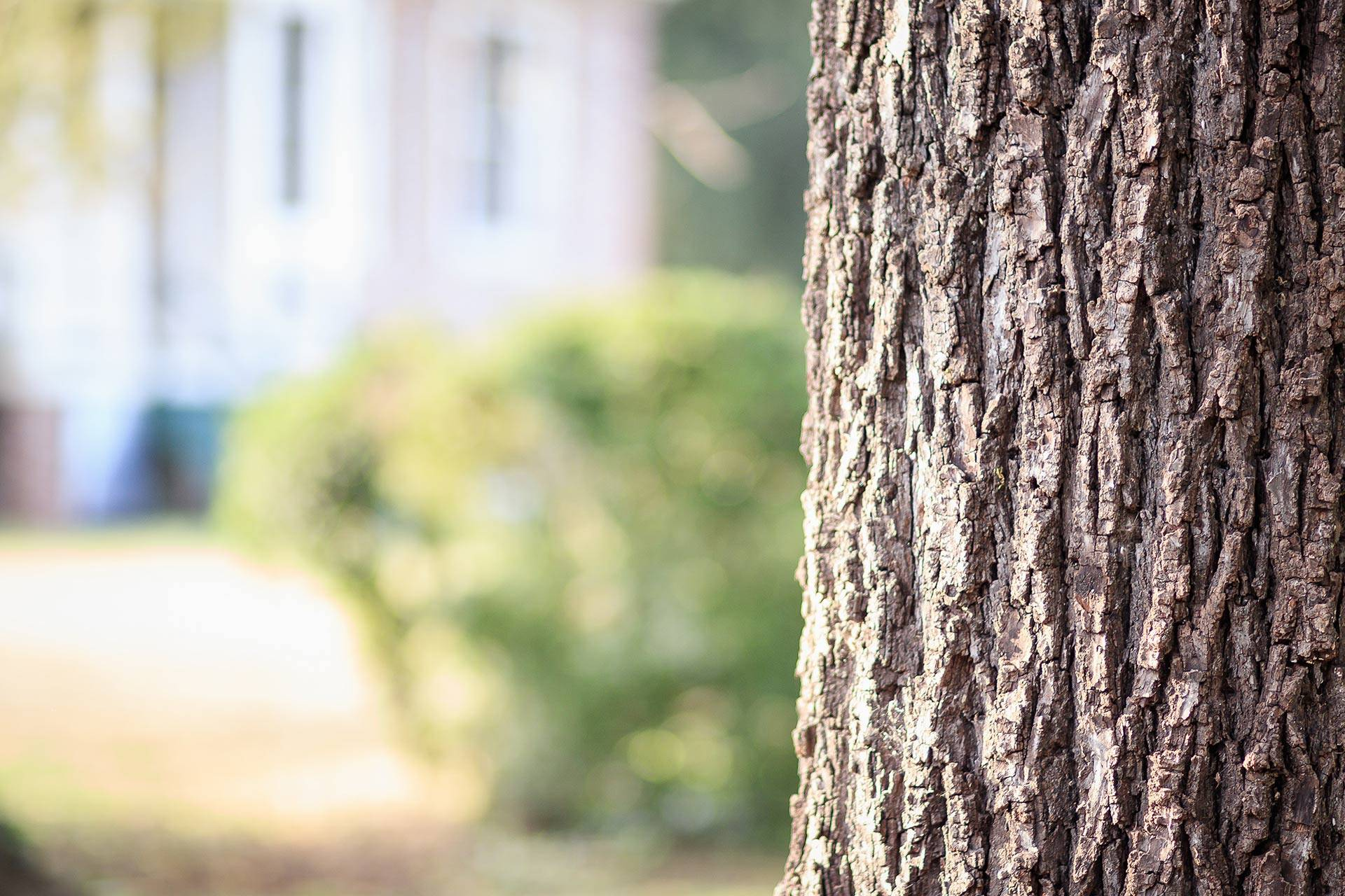 Tree Surveys and Risk Assessments